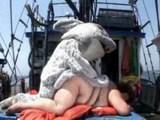 seksi morski pes pokavsa zrelo pizdo