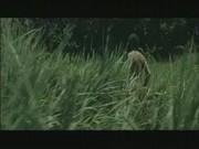 Prizori posilstva - džungelski holokavst